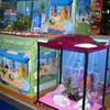 Feron Jardins - Aquarium